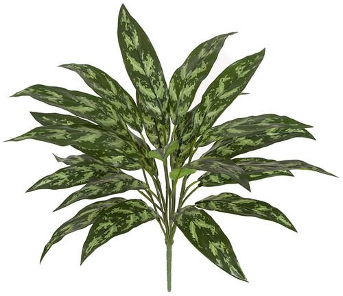 "28"" Aglaonema PlantBare Stem"