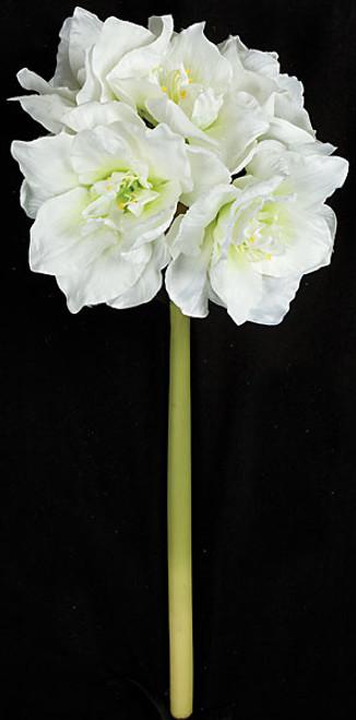 "P-12041028"" Amaryllis FlowerWhite"