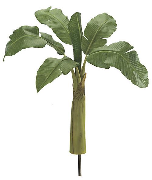"""P-6095028"""" Banana Palm Tree"""