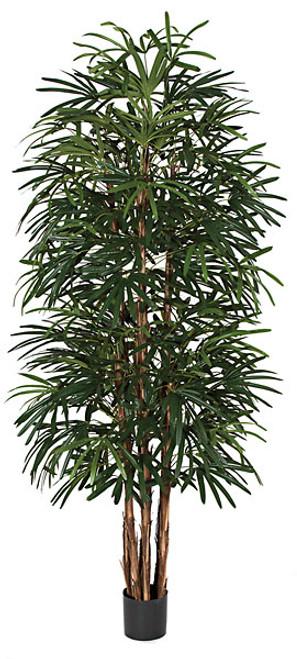 W-602699' Lady Palm Tree
