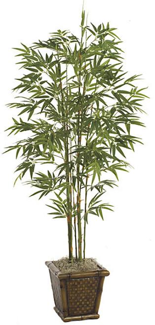 P-503705' Japanese Bamboo PalmDecorative Pot Sold Separately