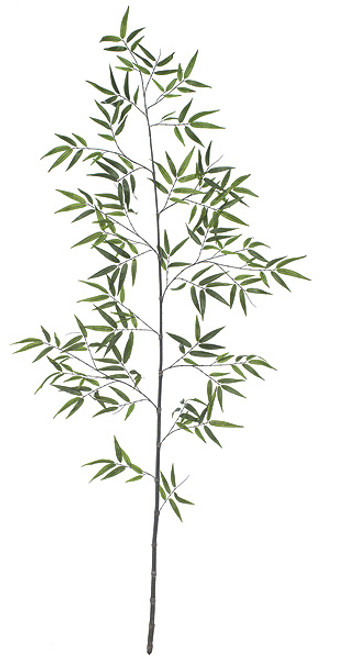 P-602338' Black Bamboo Palm