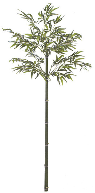 W-66806