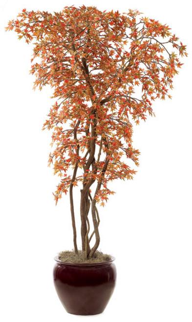 W-428RB8' Mini Japanese Maple Decorative Pot Sold Separately