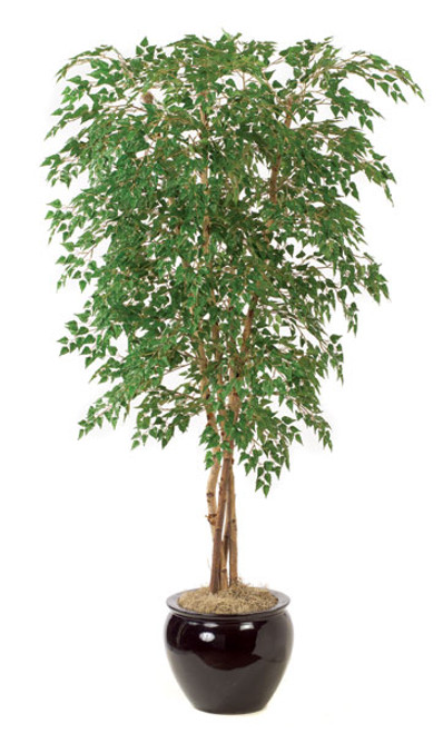 7' Birch Tree 