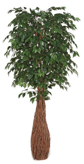 W-1501207' Ficus TreeNatural Wood Trunks