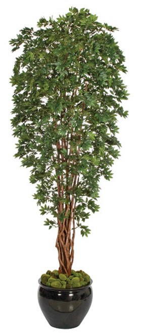 10' Lychee TreeNatural TrunksDecorative Pot Sold Separately