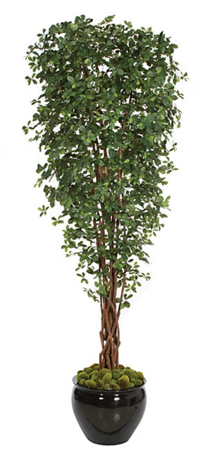 W-8007010' Black Olive TreeDecorative Planter Sold Separately
