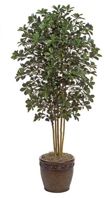 W-602717' Black Olive Tree Decorative Pot Sold Separately