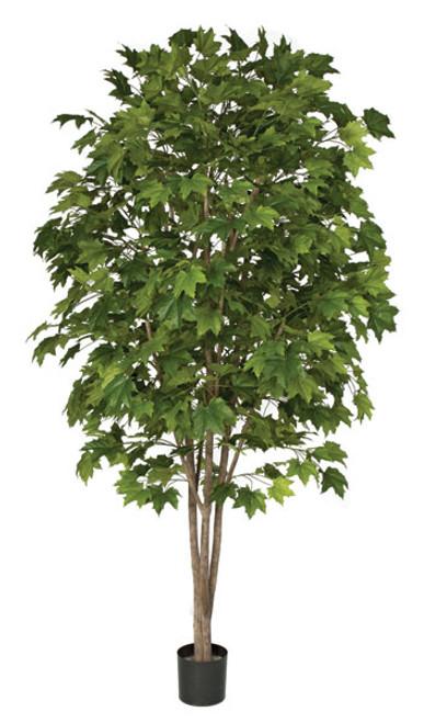 W-1401607.5' Sugar Maple TreeNatural Trunks