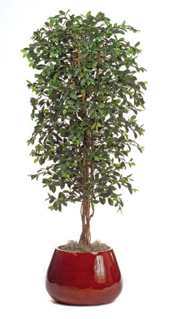 W-50020