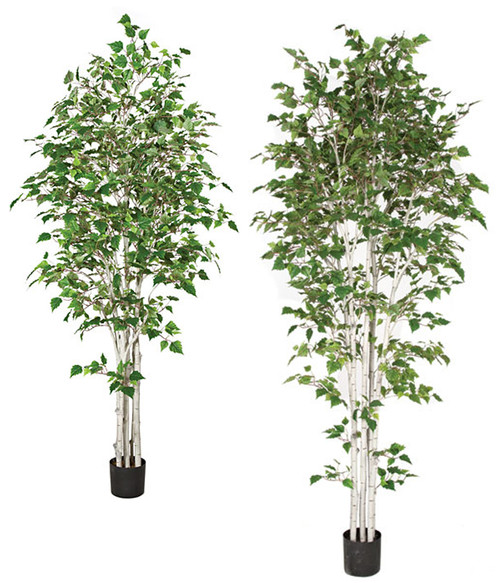 7' or 9' Birch Trees
