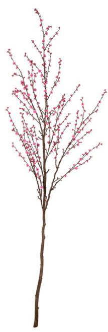 P-140167 - Pink9' Plum Tree