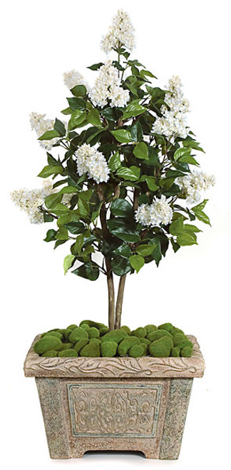 W-80210