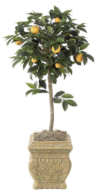W-23304.5' Orange TopiaryDecorative Pot Sold Separately