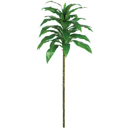 "P-8238072"" Dracaena Plant"
