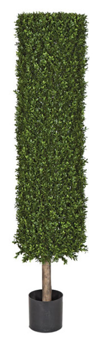 Limited UV Boxwood Cylinder Topiary