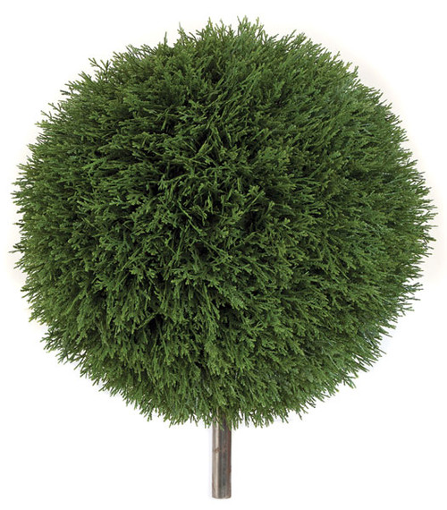 AUV-123120