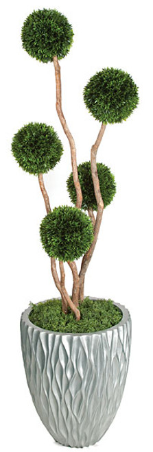 A-1380895' Podocarpus Ball Topiary