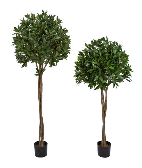 4.5' and 5.5' Bay Leaf Ball  Topiaries