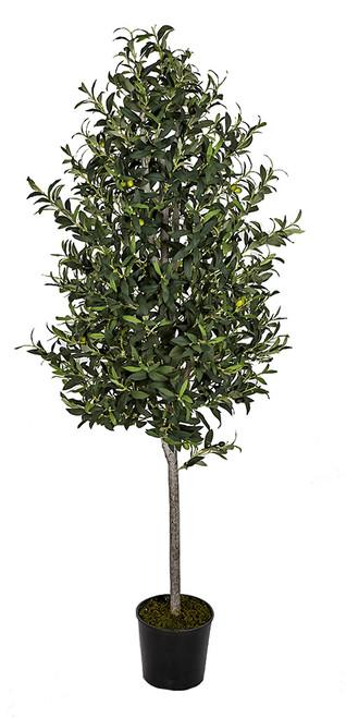 W-2921 6' Olive Tree