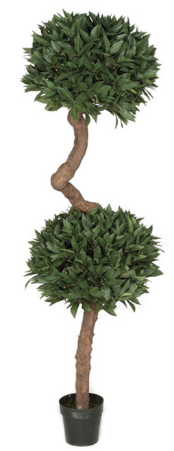 W-1302006' French Laurel Topiary