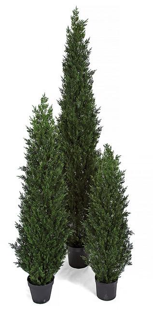 4', 5', and 7' Tall Cedar Trees