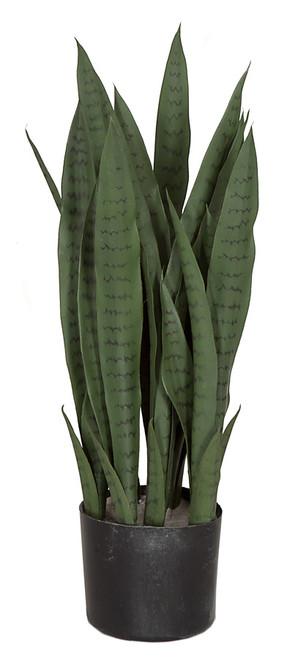 "A-16218528"" Sansevieria Plant"