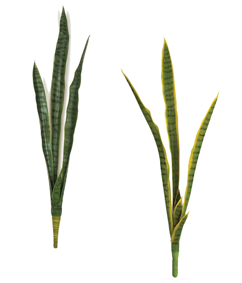 Sansevieria Plants - Green or Green/Yellow