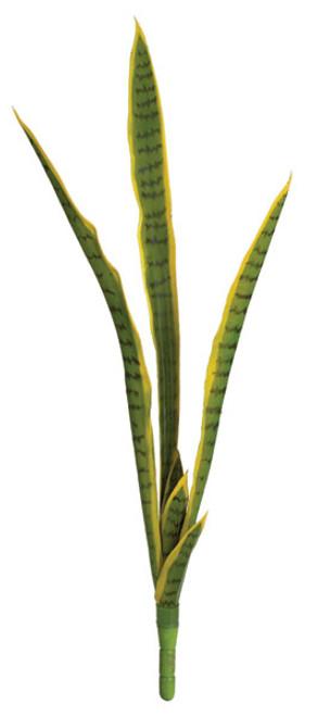 """A-152030 - Green/Yellow34"""" Sansevieria"""