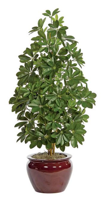 W-15703' Schefflera PlantDecorative Pot Sold Separately