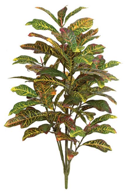 P-1507504' Croton PlantSoft Touch