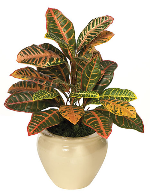 "P-112024"" Croton BushDecorative Pot Sold Separately"