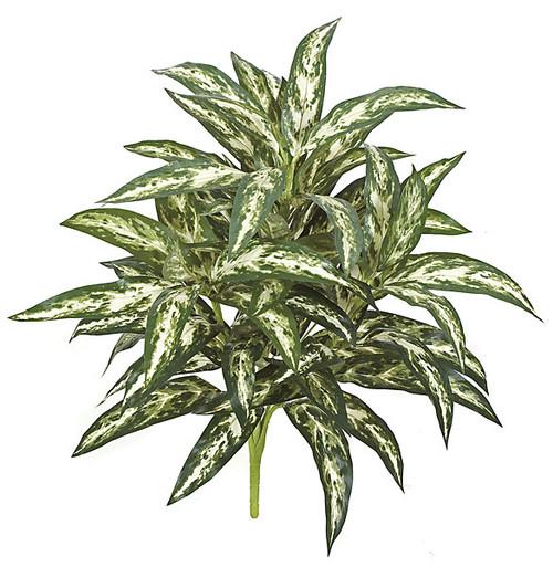 "P-10097026"" Aglaonema PlantGreen/White"