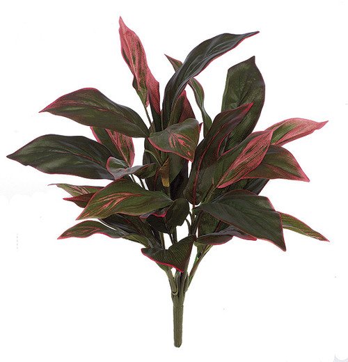 "P-5075020"" Cordyline PlantFuchsia Red/Green"