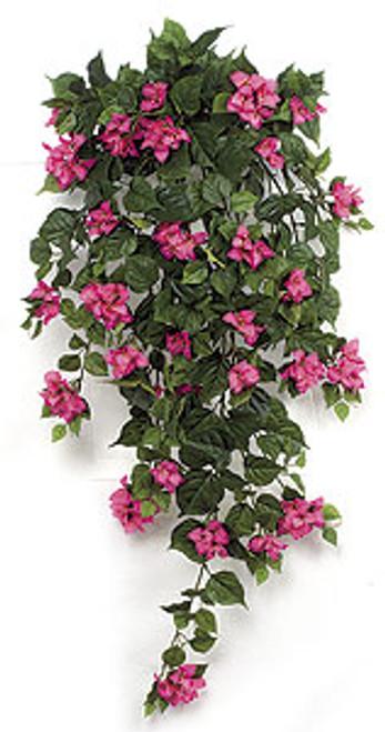 P-1831 - BeautyBougainvillea Bush