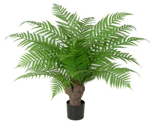"AR-16185030"" Alsophila Tree"