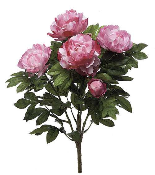 "P-5078023"" Peony BushTuton Pink"