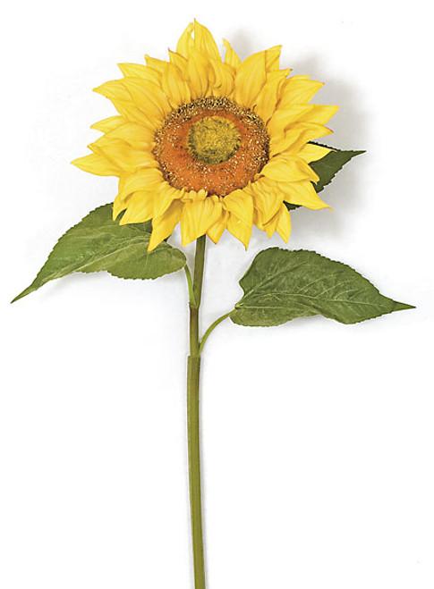 "P-10001037"" Sunflower StemGold/Yellow"