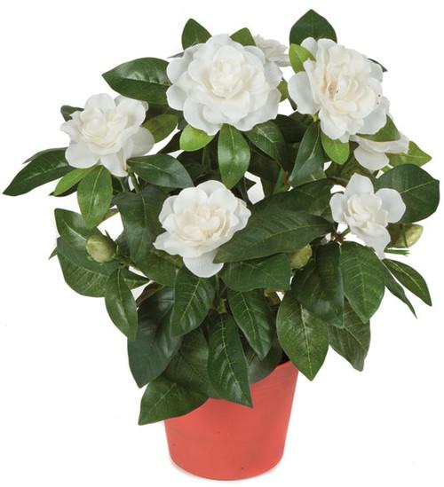 """P-367016"""" Potted GardeniaWhite"""