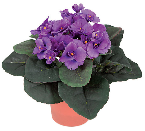 """P-366010"""" Potted African VioletPurple"""