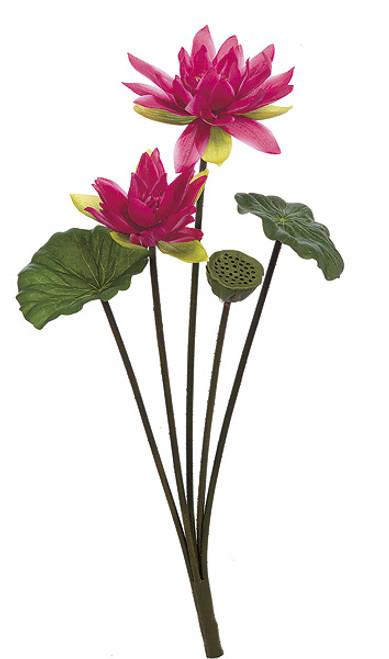 """P-6194030"""" Lotus BushFuchsia Color"""