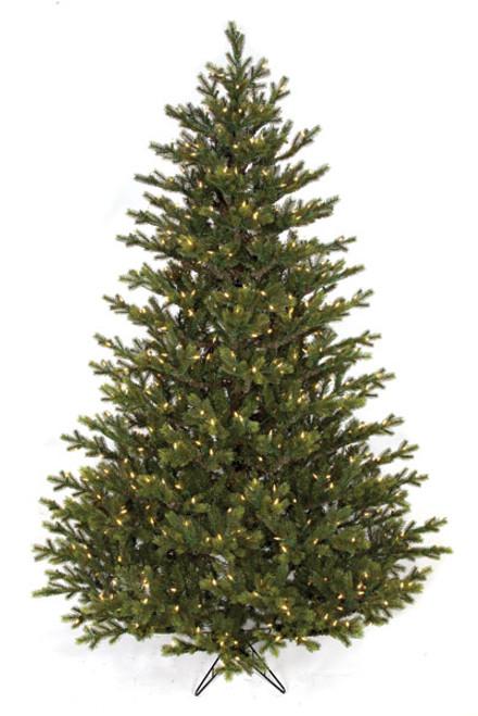 C-1402047.5' Full Size English Fir Tree