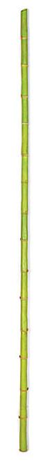 "A-12127772"" Plastic Bamboo PoleLight Green"