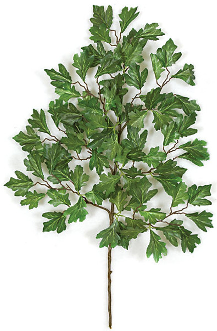 """P-40226"""" Scarlet Oak Branch"""
