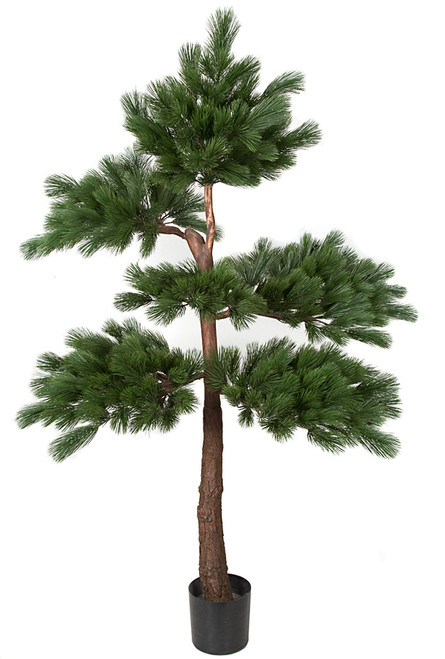 W-1600607' Pine Tree