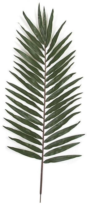 "PR-09460"" Giant Palm Branch"