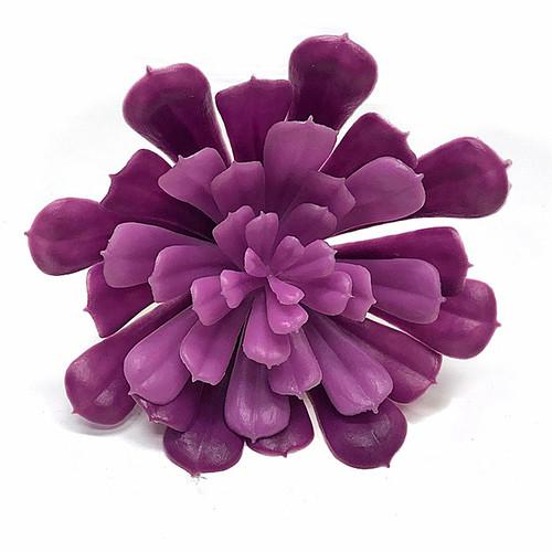 """A-1642706.5"""" EcheveriaTutone Purple"""