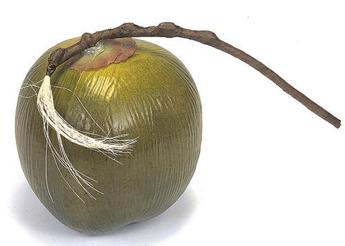 "A-1235.5"" Single Coconut Green/Brown"