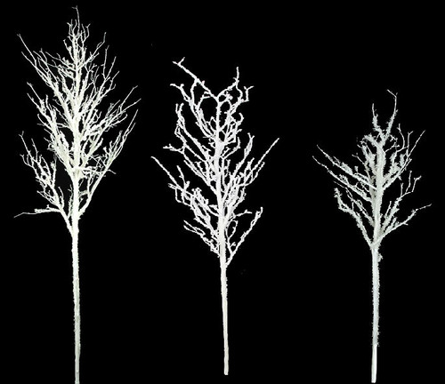 "Snowy Populus Trees From 42"", 60"" , and 80"" Tall"